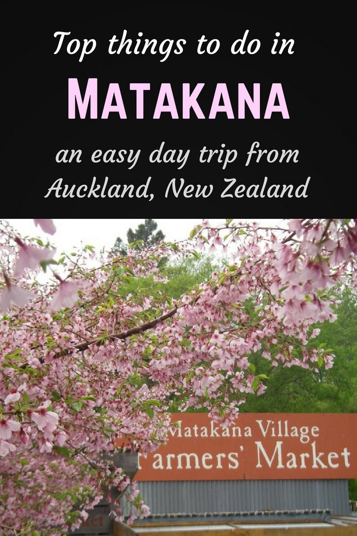 Top things to do in Matakana Pinterest pin