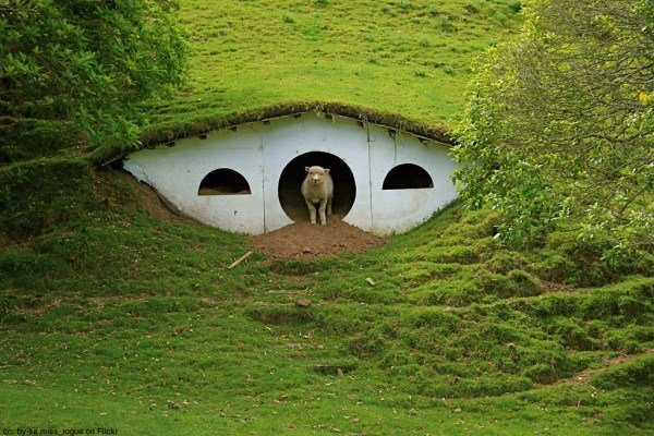 hobbiton sheep matamata new zealand
