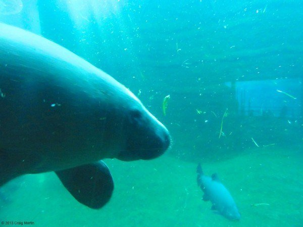 And we were able to see manatees for the first time. They're huge!