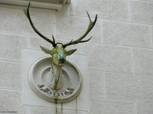 Stag head in the central courtyard.