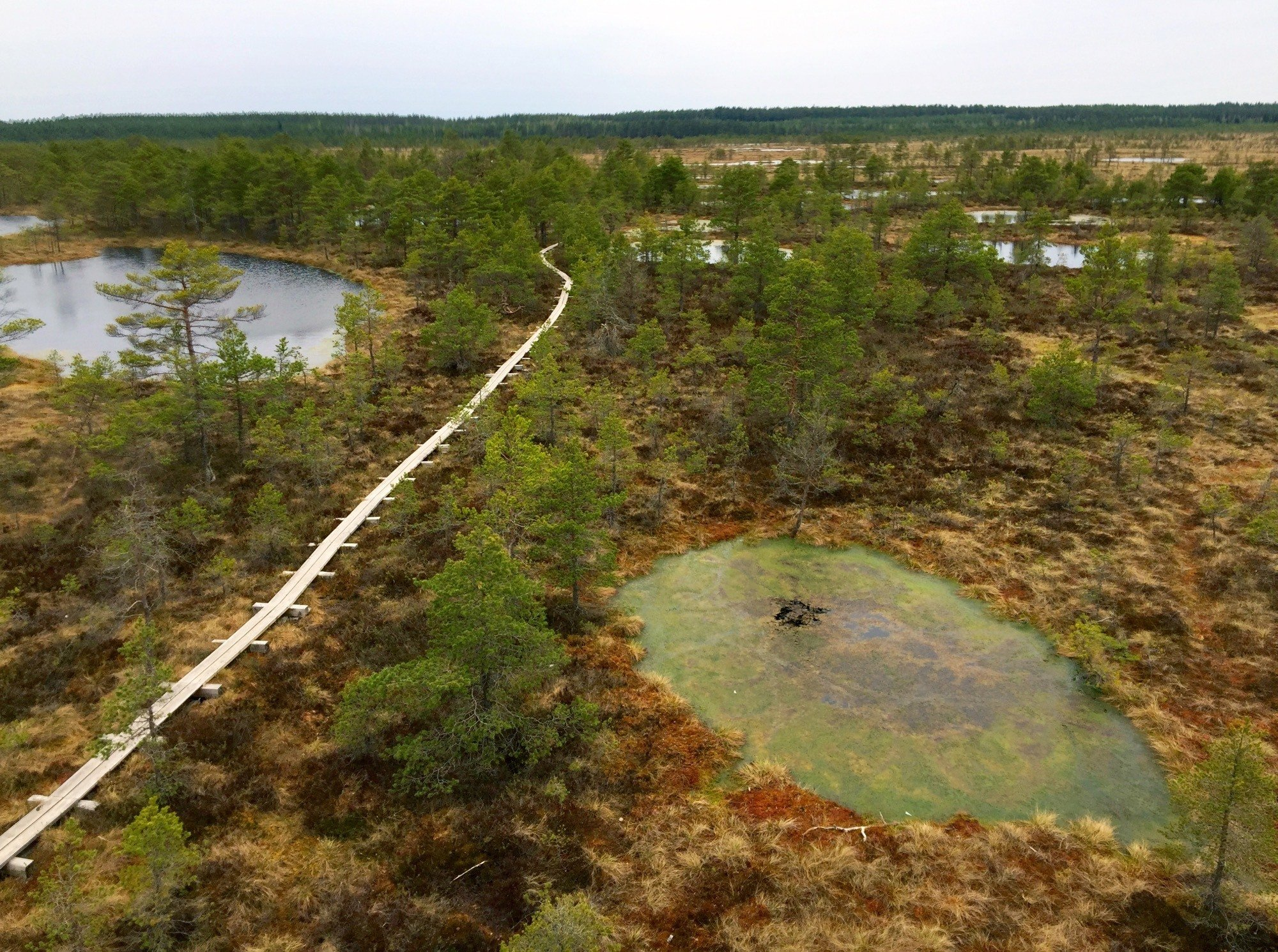 Bog walking in Kõnnu Suursoo national park