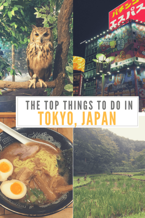 What to do in Tokyo, Japan Pinterest pin