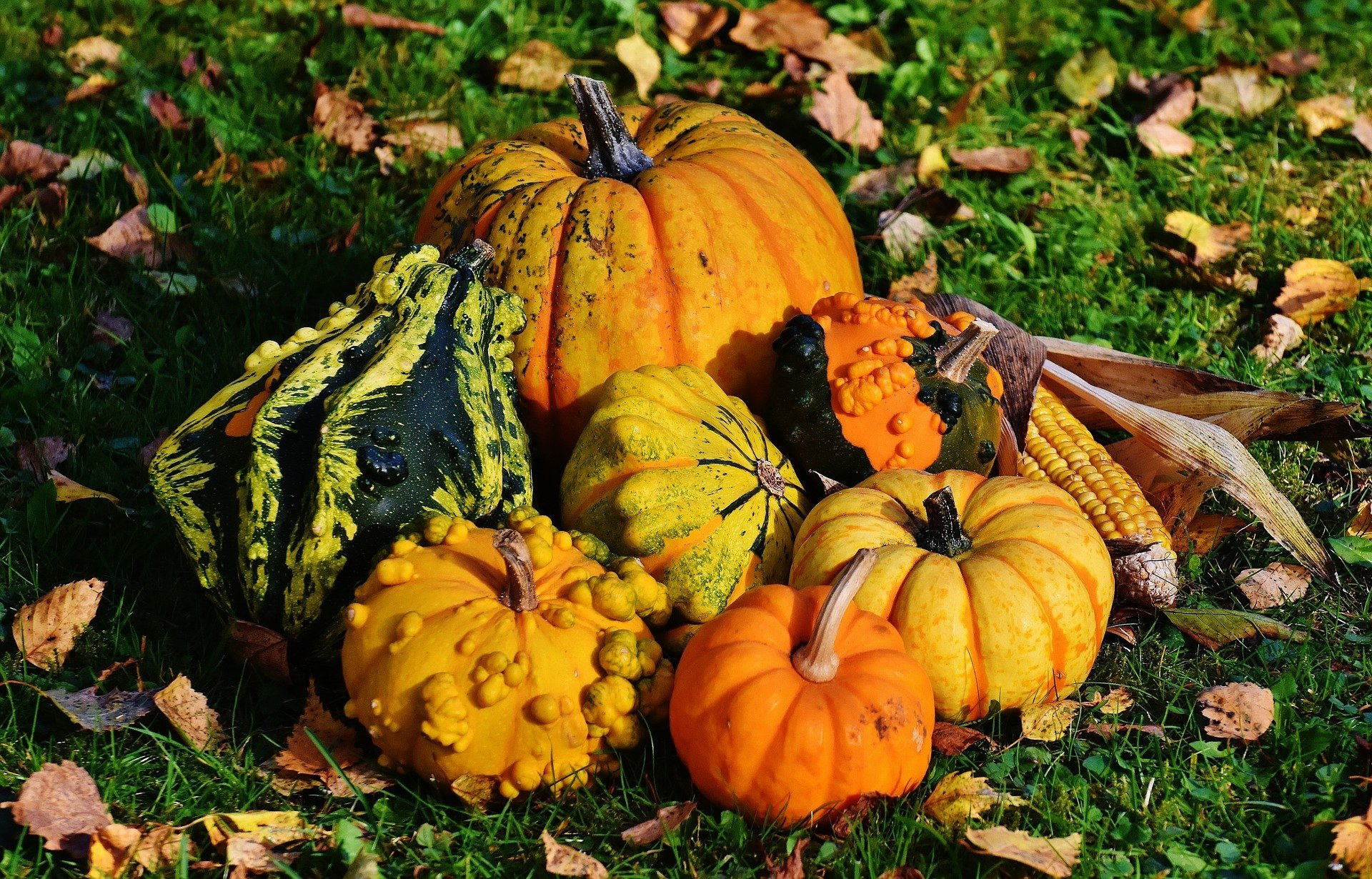 Pumpkins -- a Thanksgiving symbol.