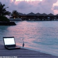 Bird, sunset and computer by Giorgio Montersino on Flickr