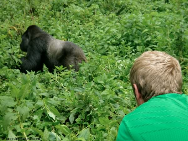 Me and the Silverback in Rwanda