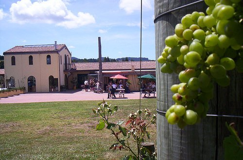 ascension-winery
