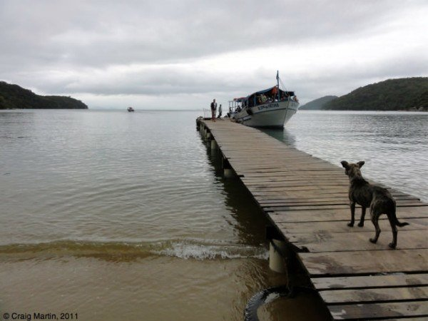 dog watches boat on ihla grande, brazil