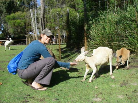 feeding-kangaroos-at-caversham-perth