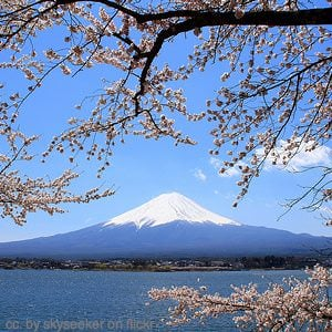 mt fuji and cherry blossoms - japan travel information