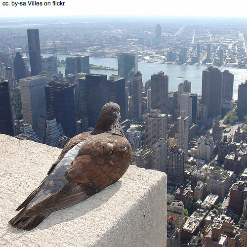 Pidgeon sits on the Empire State building, New York