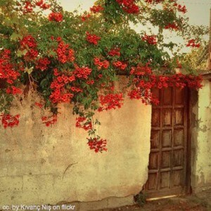 red flowers on a cream wall in Greece square - Greece travel information